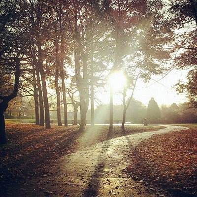 Morning in the Park