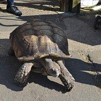 Turtle...