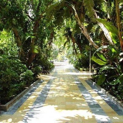 Tunnel of cool greenery