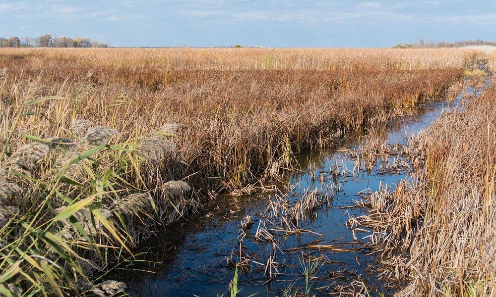 Marsh and Drainage