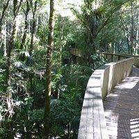 AH Reed Kauri Park