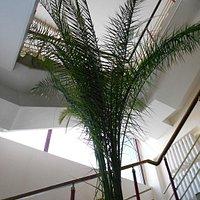 Эта пальма выращена из косточки в 1955 году первым директором дворца Верой Антоновной Музыченко