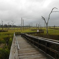 Cradle Creek Preserve - Boardwalk thru Salt Marsh