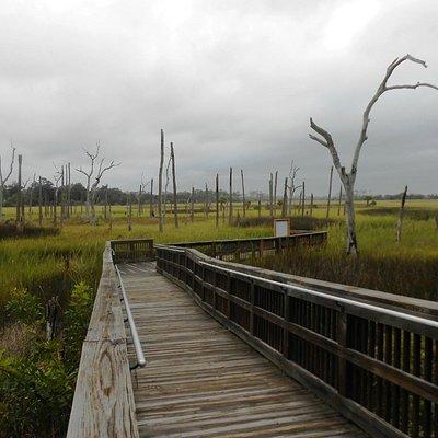 Cradle Creek Preserve - Boardwalk thru Salt Marsh
