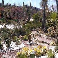 Vista general del jardín botánico Helia Bravo