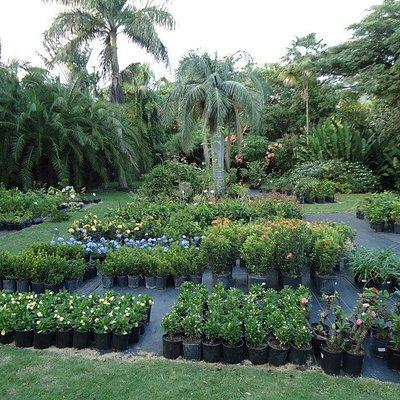 Cruzan Gardens Nursery Grounds