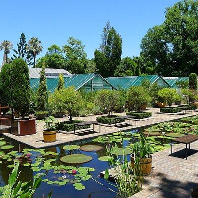 Waterliliy pools in summer