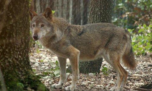 Centro visita del lupo - Popoli