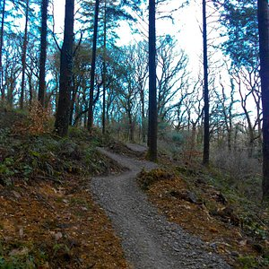 Timber Trail