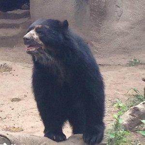 Belo urso!!!!