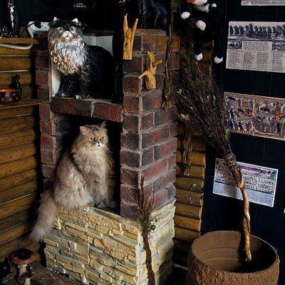 Один из хранителей Музея - персидская кошка Мэри