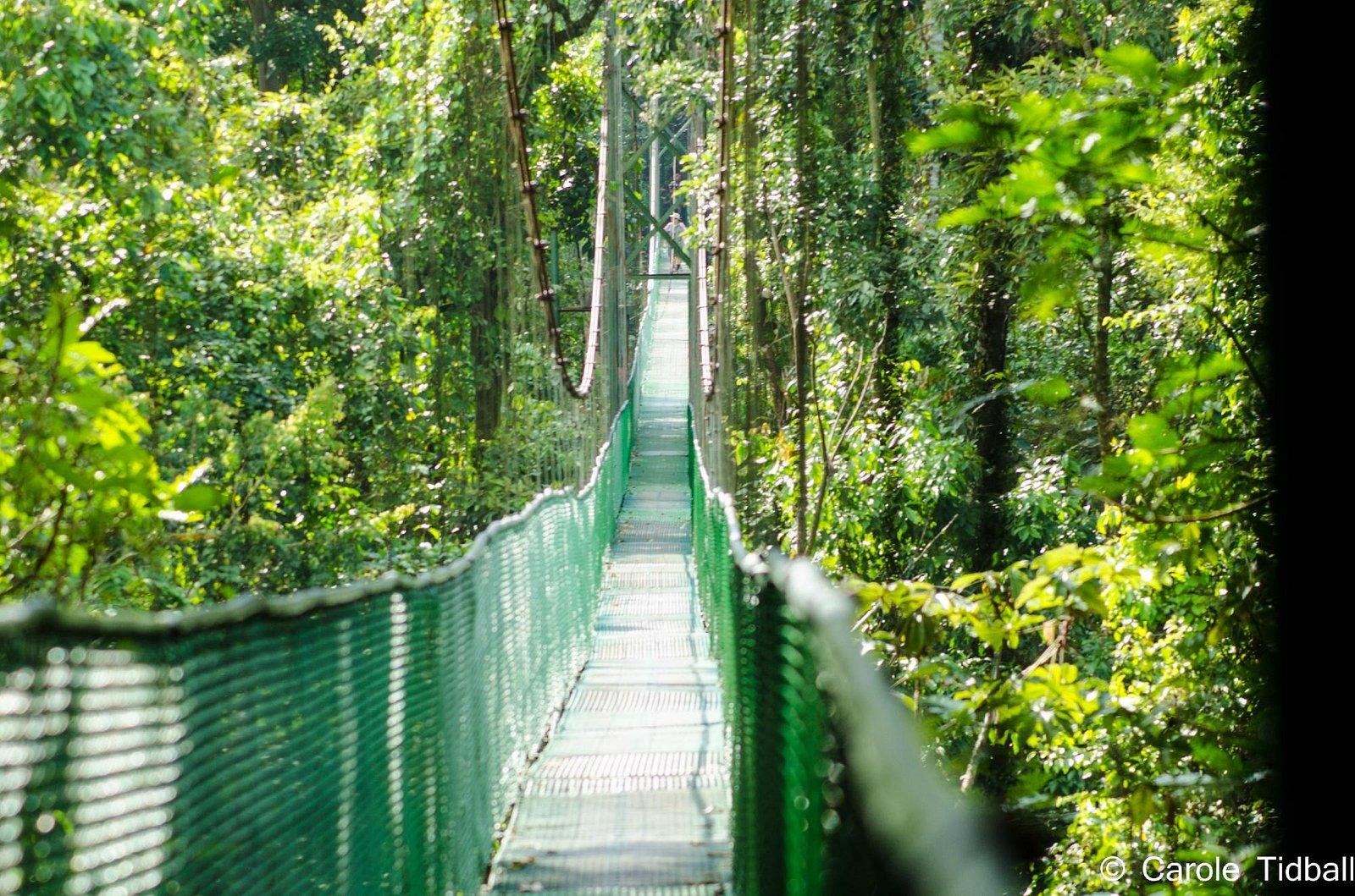 The suspension bridge.
