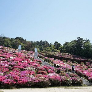 Provided by Hiroshima City Forestry Park