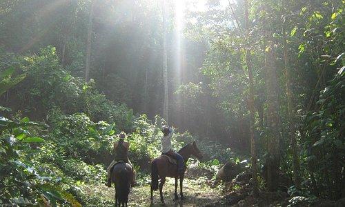 Jungle Spa Adventure