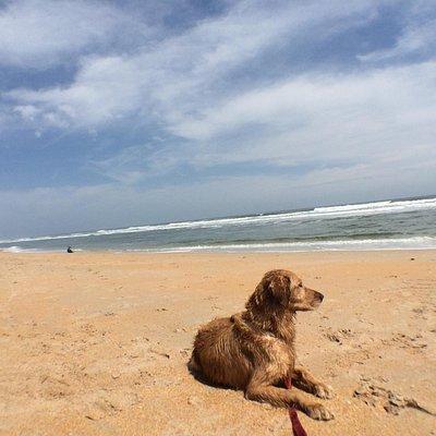 Dog friendly beach!