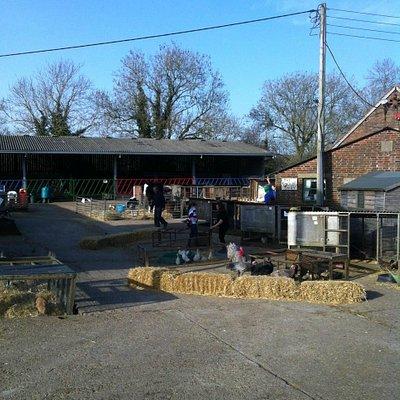 Miller's Ark farm yard