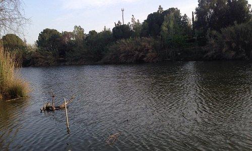 Athalassa park lake