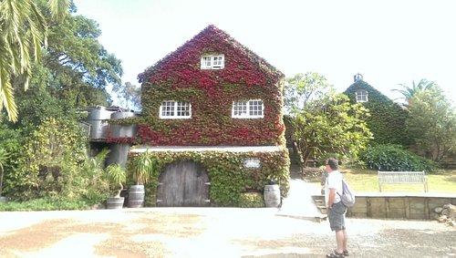 Autumn leaves on Stonyridge House