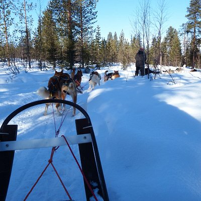 dog sledding with our guide