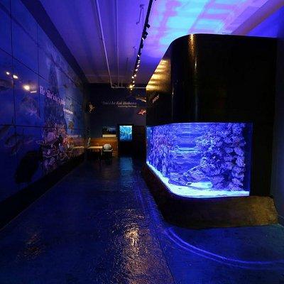 Check out the Discovery Center's 3,500 gallon aquarium!