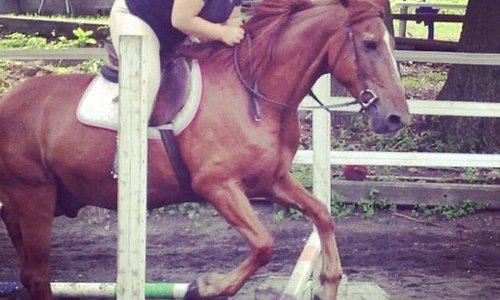 Girl on her horse