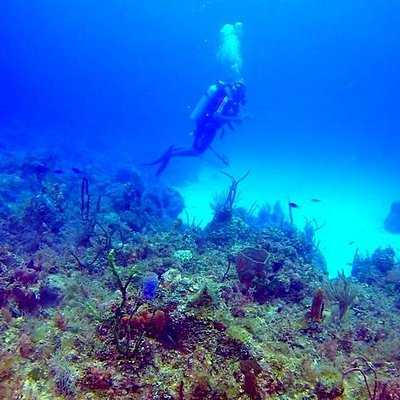 Diving Coral Gardens Reef.
