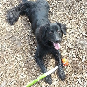 Bailey at the dog park