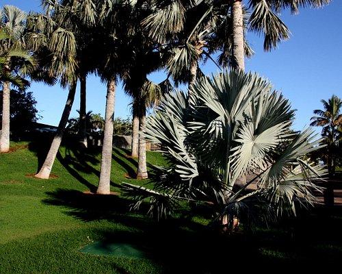 einige der über 400 Palmenarten