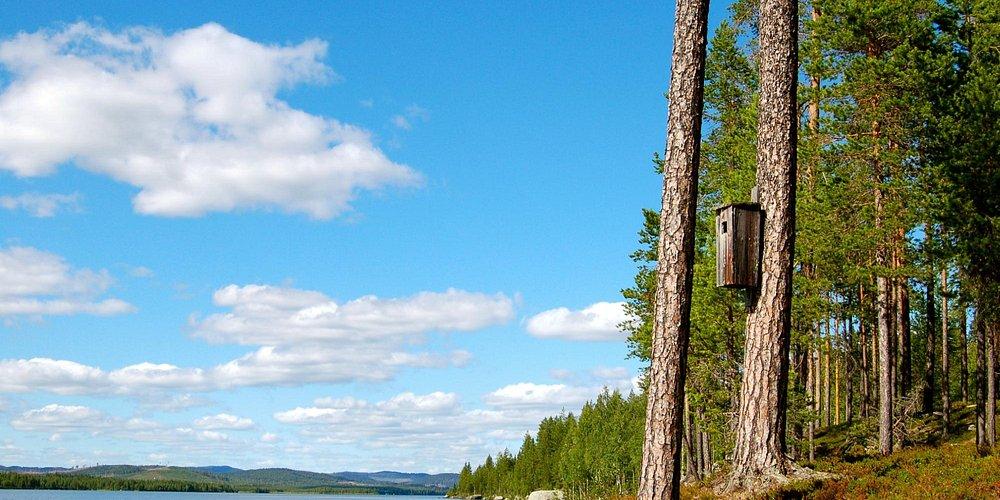 Scenery near the lake.