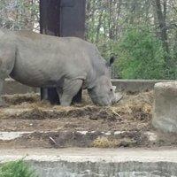 Rhino scarry lol