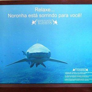 Museu do Tubarão