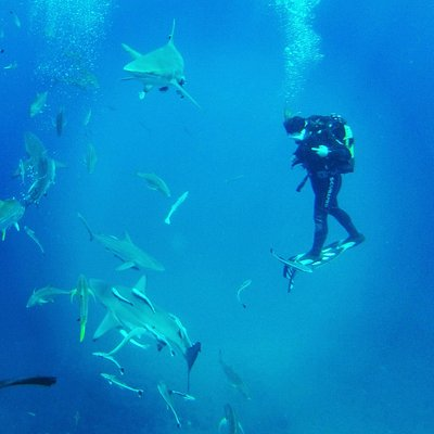 baited shark dive