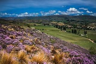Hill Shot of Akarua Vineyard