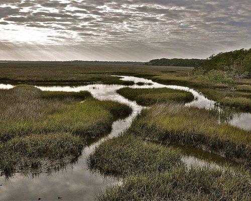 Guana marsh