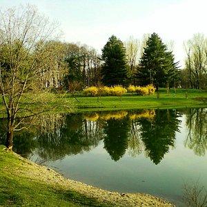 il laghetto e sullo sfondo le conifere