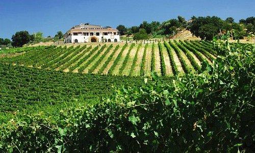 Vineyards in summer!