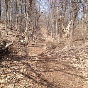 Ellison Park trail