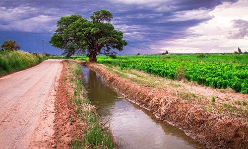 Vineyards at Kanoneiland