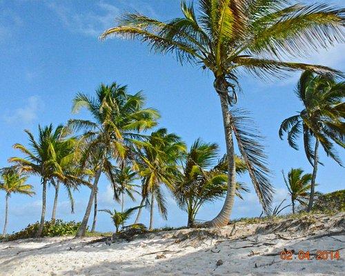 palme ecielo azzurro
