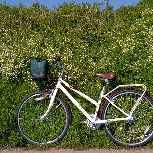 Spring bike ride into Colyton