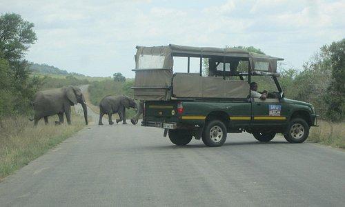 Elephants with GAP