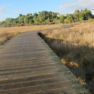 boardwalk over swamp