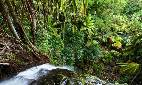 An important source of water for Praslin, Vallee de Mai boasts a beautiful waterfall
