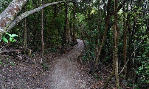 Sunshine Bay Walk
