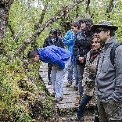 Contemplando la naturaleza en el Parque Nacional Chiloé