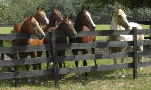 Horses at the ranch.