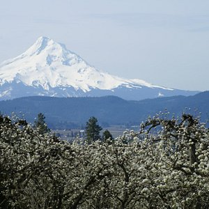 Mt Hood from just below Panorama Point