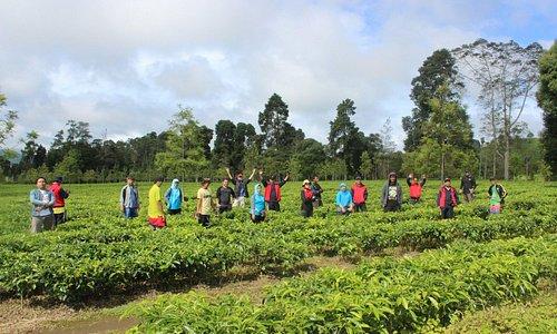 Perkebunan teh Malabar Penggalengan