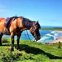 Maisey looking over Machir Bay