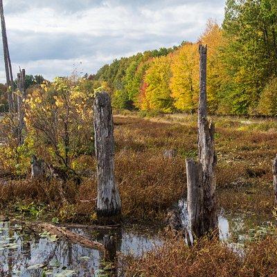Autumn at the Marsh